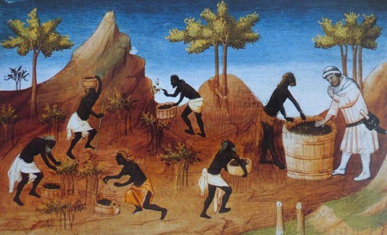 История на черния пипер